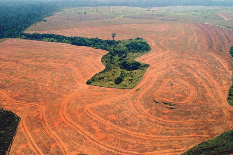 nouveau code forestier