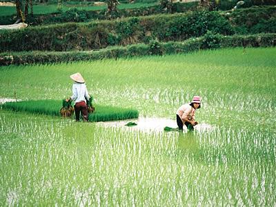 vietnam-28
