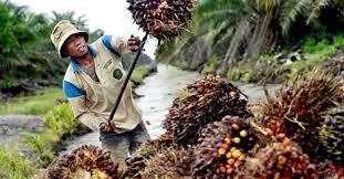 malaisie-huile-de-palme
