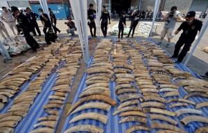 4-tonnes-ivoires-confisques